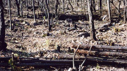 Retour sur les incendies, catastrophe environnementale