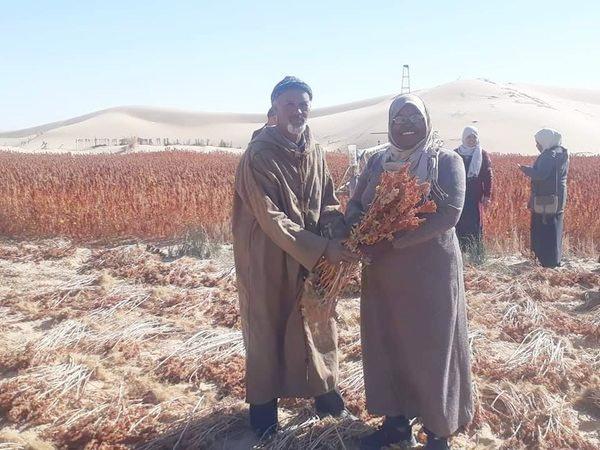 Culture du quinoa en Algérie