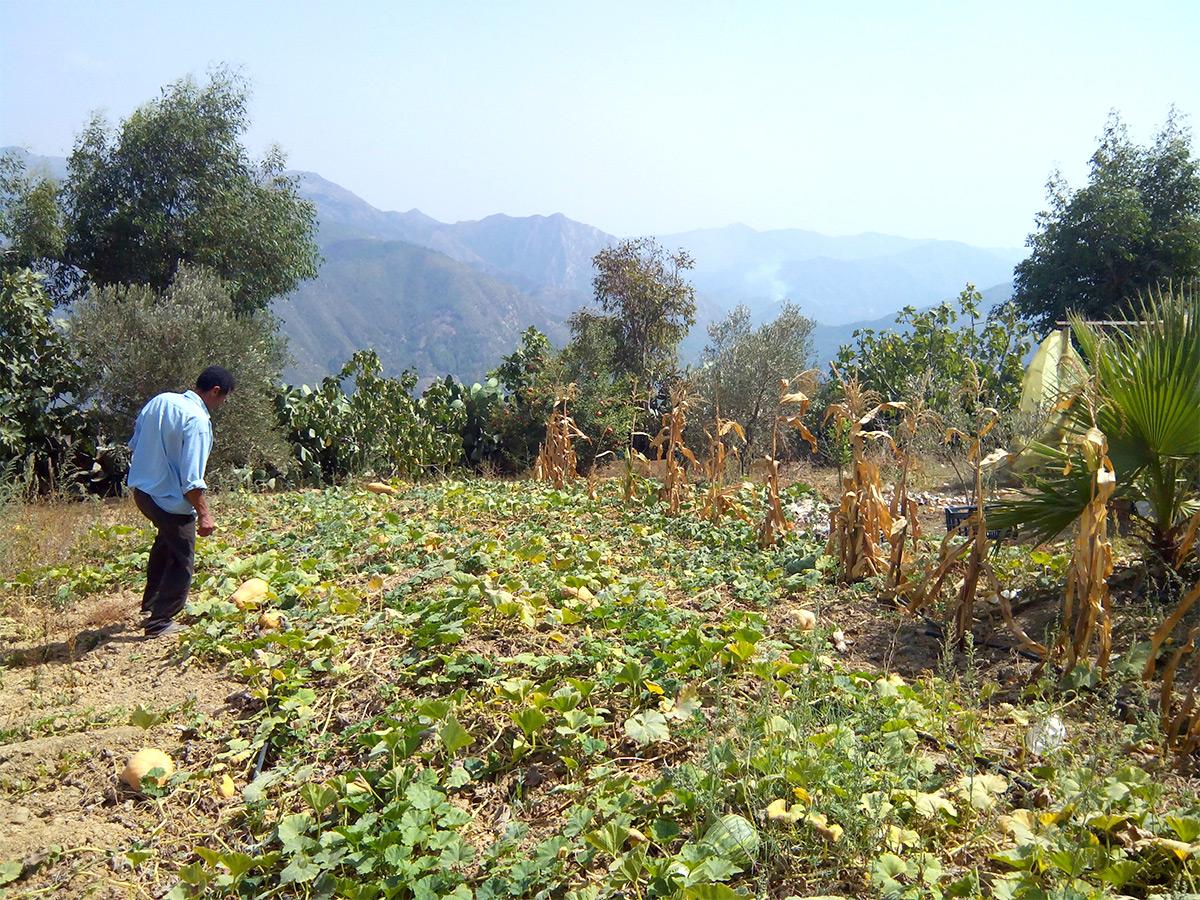 Formation/Visite d'une ferme agrotouristique à Sidi Serhane