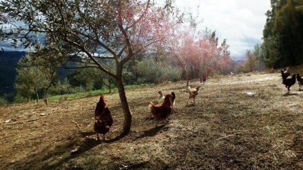 Formation Agroécologie et élevage