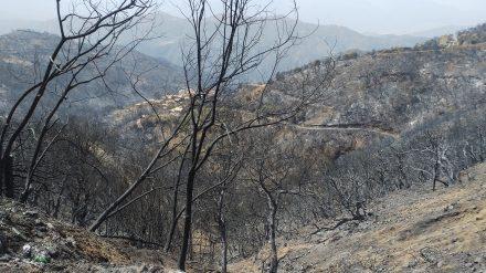 Appel à dons aux paysans victimes des incendies